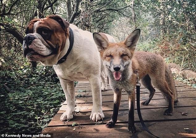 Dog - © Kennedy News and Media
