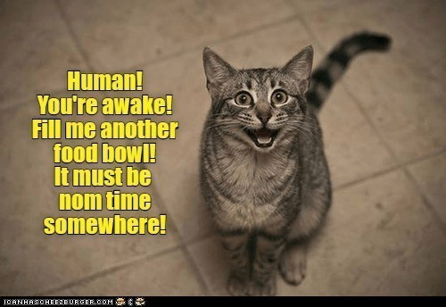 Cat - Human! You're awake! Fill me another food bowl! It must be nom time somewhere! ICANHASCHEEZE URGER.COM