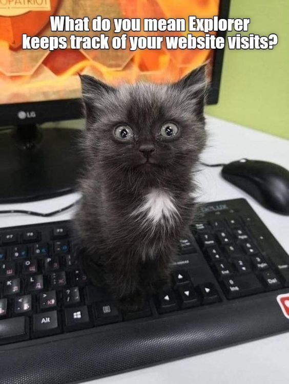 Cat - What do you mean Explorer keeps track of your website visits? LG 66ADK Alt