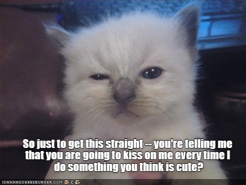 Cat - So just to get this straight-you're telling me that you are going to kiss on me every timel do something you think is cute? ICANHASCHEEZBURGER.COM
