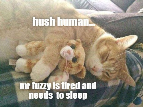 Cat - hush human mr fuzzy is tired and needs to sleep
