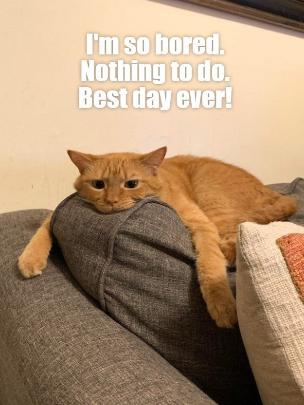 Cat - I'm so bored. Nothing to do. Best day ever!