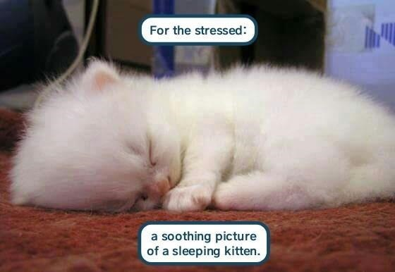 Cat - For the stressed: a soothing picture of a sleeping kitten.