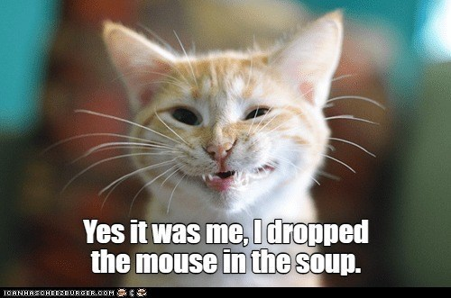 Cat - Yes it was me, Idropped the mouse in the soup. ICANHASCHEEZE URGER.COM