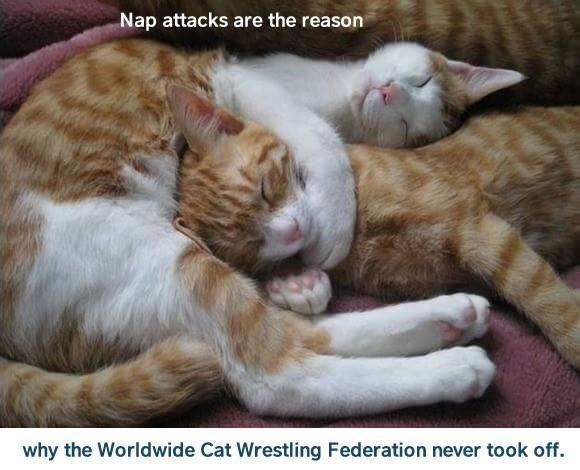 Cat - Nap attacks are the reason why the Worldwide Cat Wrestling Federation never took off.