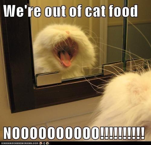 Cat - We're out of cat food NO00000000O!! ICANHASCHEEZE URGER.COM