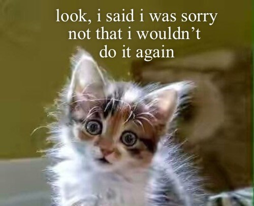Cat - look, i said i was sorry not that i wouldn't do it again