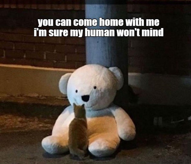 Stuffed toy - you can come home with me i'm sure my human won't mind