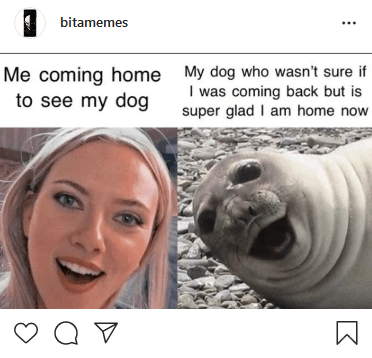 Seal - bitamemes Me coming home My dog who wasn't sure if I was coming back but is super glad I am home now to see my dog