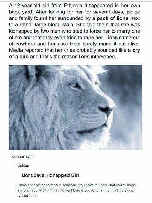 Lion - A 12-year-old girl from Ethiopia disappeared in her own back yard. After looking for her for several days, police and family found her surrounded by a pack of lions next to a rather large blood stain. She told them that she was kidnapped by two men who tried to force her to marry one of em and that they even tried to rape her. Lions came out of nowhere and her assailants barely made it out alive. Media reported that her cries probably sounded like a cry of a cub and that's the reason lion