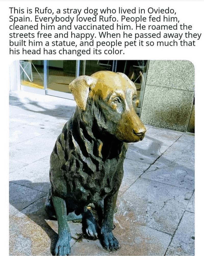 Dog - This is Rufo, a stray dog who lived in Oviedo, Spain. Everybody ſoved Rufo. People fed him, cleaned him and vaccinated him. He roamed the streets free and happy. When he passed away they built him a statue, and people pet it so much that his head has changed its color.