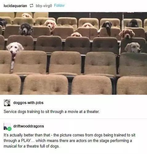Furniture - lucidaquarian 3 bby-virgo Follow doggos-with-jobs Service dogs training to sit through a movie at a theater. driftwooddragons It's actually better than that - the picture comes from dogs being trained to sit through a PLAY. which means there are actors on the stage performing a musical for a theatre full of dogs.
