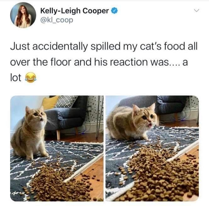 Cat - Kelly-Leigh Cooper @kl_coop Just accidentally spilled my cat's food all over the floor and his reaction was.... a lot