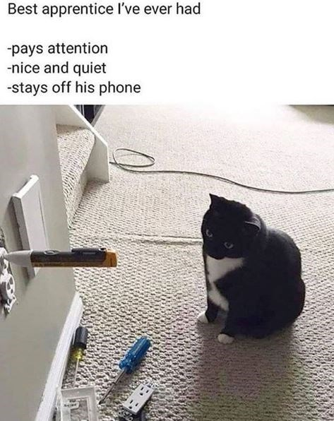 Cat - Best apprentice I've ever had -pays attention -nice and quiet -stays off his phone