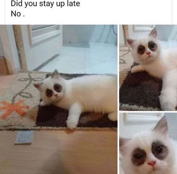 Cat - Did you stay up late No.
