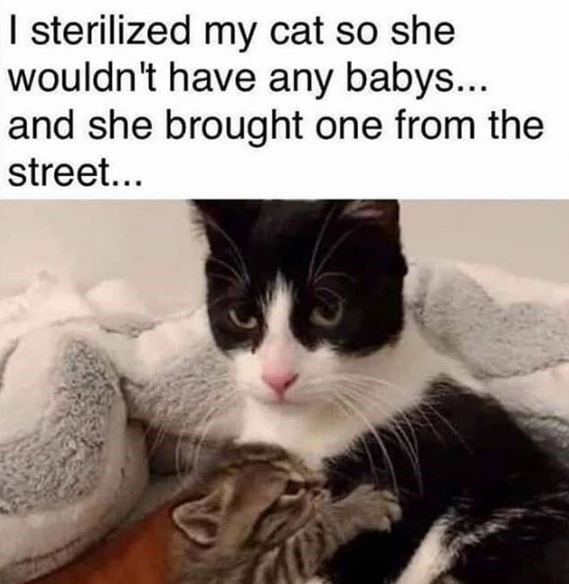 Cat - I sterilized my cat so she wouldn't have any babys... and she brought one from the street...