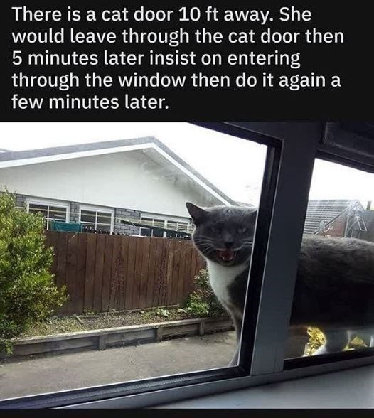 Cat - There is a cat door 10 ft away. She would leave through the cat door then 5 minutes later insist on entering through the window then do it again a few minutes later.