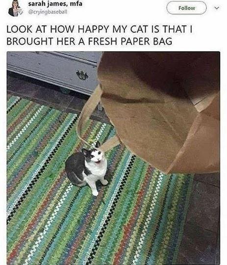 Cat - sarah james, mfa @cryingbaseball Follow LOOK AT HOW HAPPY MY CAT IS THAT I BROUGHT HERA FRESH PAPER BAG