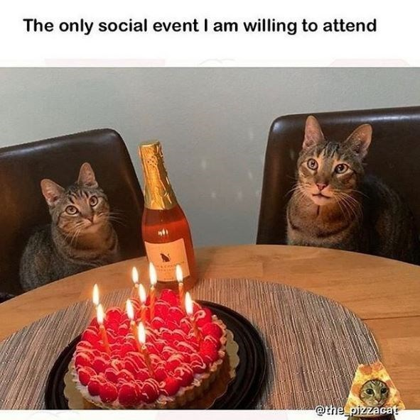 Cat - The only social event I am willing to attend @the pizzacat