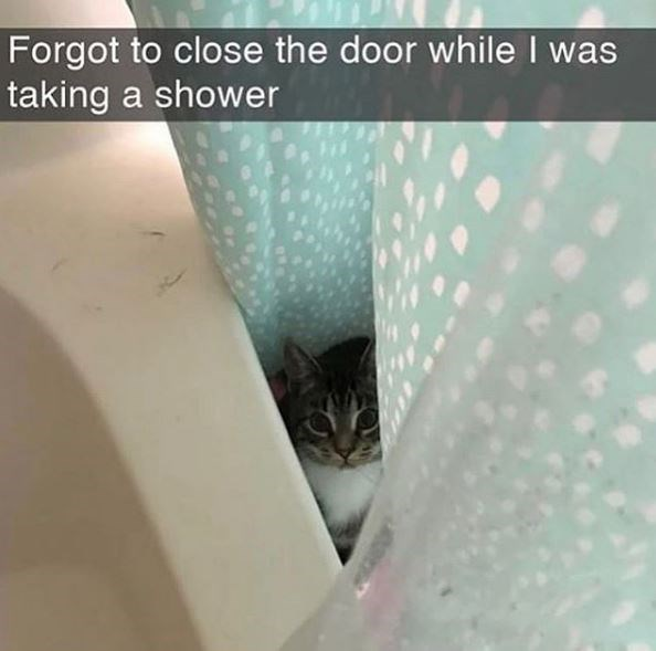 Cat - Forgot to close the door while I was taking a shower