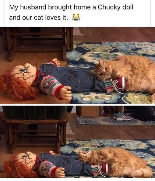 Photography - My husband brought home a Chucky doll and our cat loves it.