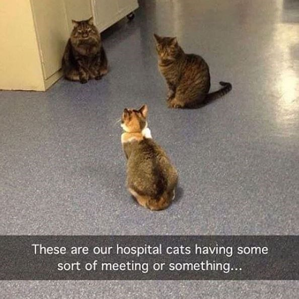 Cat - These are our hospital cats having some sort of meeting or something...