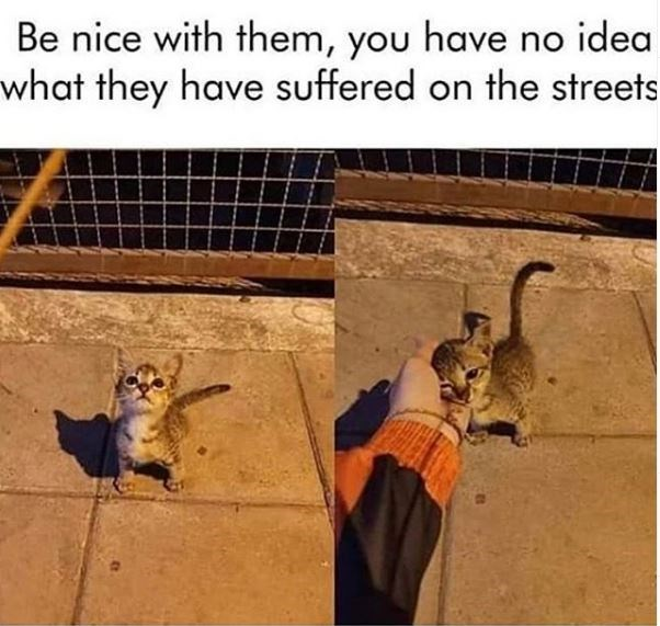 Tile - Be nice with them, you have no idea what they have suffered on the streets