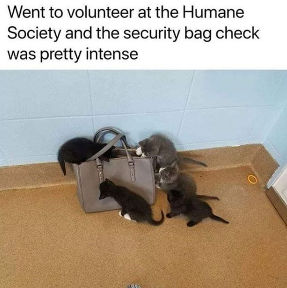 Cat - Went to volunteer at the Humane Society and the security bag check was pretty intense