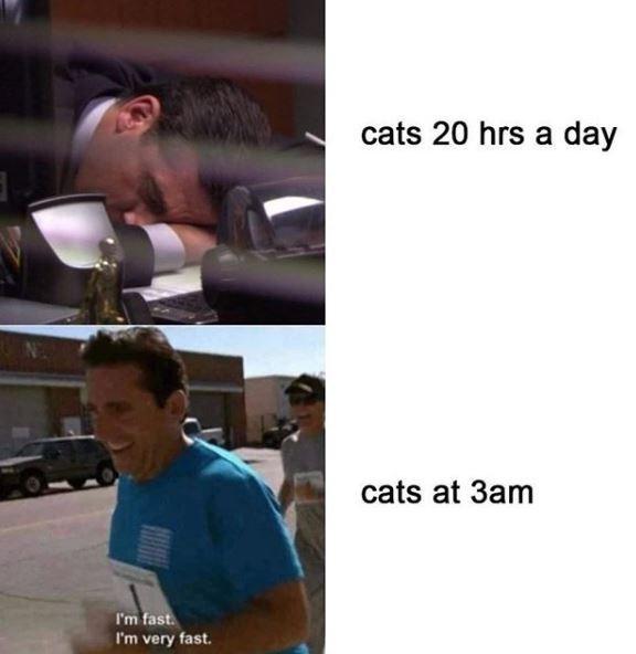 cats 20 hrs a day cats at 3am I'm fast. I'm very fast.
