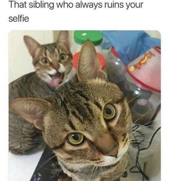 Cat - That sibling who always ruins your selfie