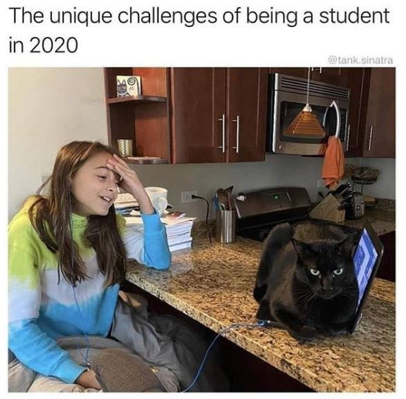 Cat - The unique challenges of being a student in 2020 @tank.sinatra