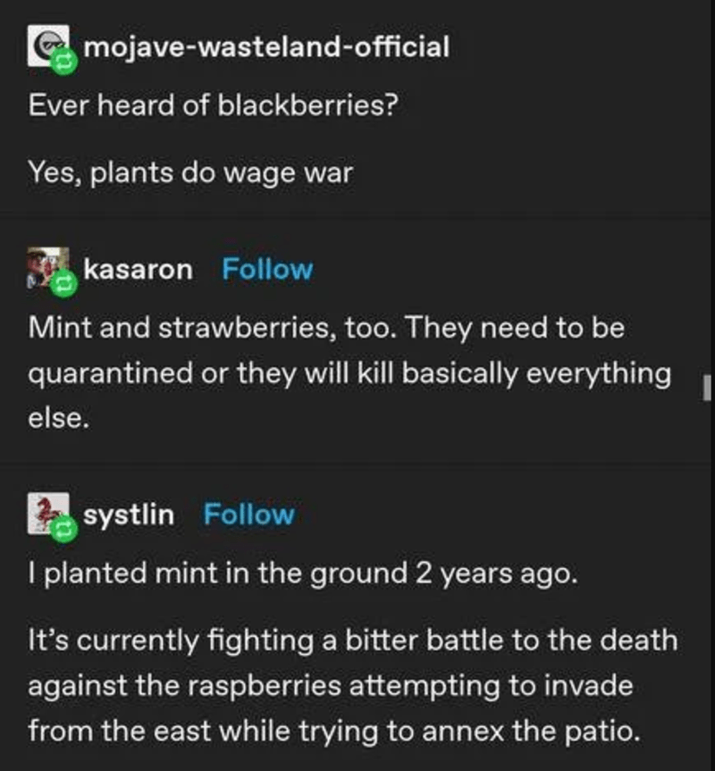 Text - mojave-wasteland-official Ever heard of blackberries? Yes, plants do wage war kasaron Follow Mint and strawberries, too. They need to be quarantined or they will kill basically everything else. systlin Follow I planted mint in the ground 2 years ago. It's currently fighting a bitter battle to the death against the raspberries attempting to invade from the east while trying to annex the patio.
