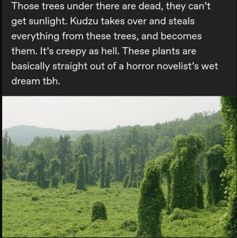 Natural landscape - Those trees under there are dead, they can't get sunlight. Kudzu takes over and steals everything from these trees, and becomes them. It's creepy as hell. These plants are basically straight out of a horror novelist's wet dream tbh.