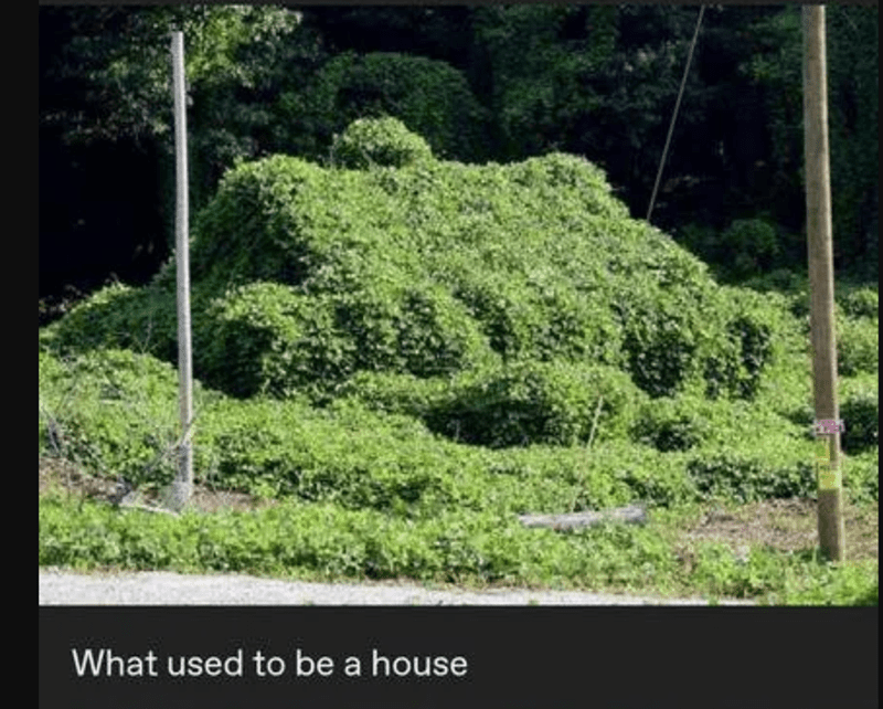 Vegetation - What used to be a house