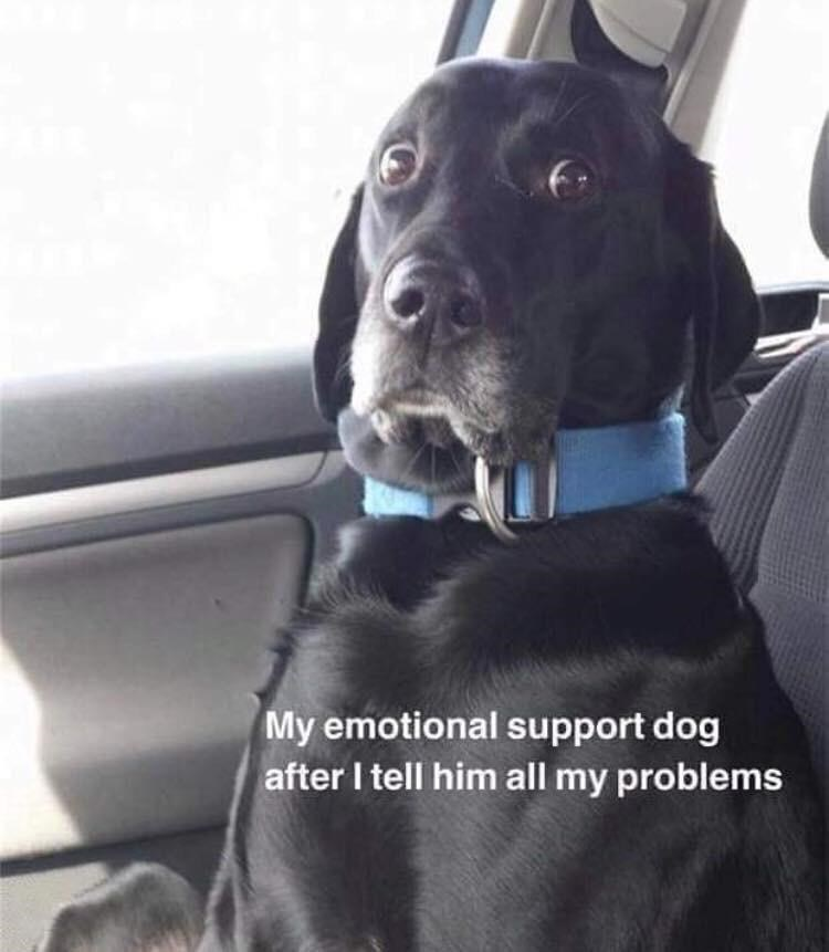 Dog - My emotional support dog after I tell him all my problems