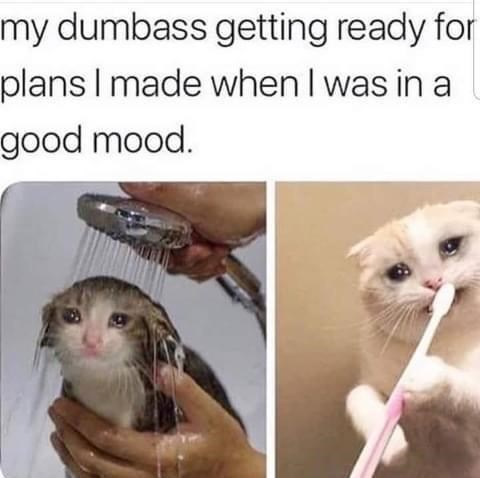 Cat - my dumbass getting ready for plans I made when I was in a good mood.