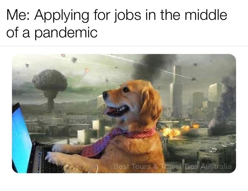 Dog - Me: Applying for jobs in the middle of a pandemic Best Tours & Travel Tips Australia