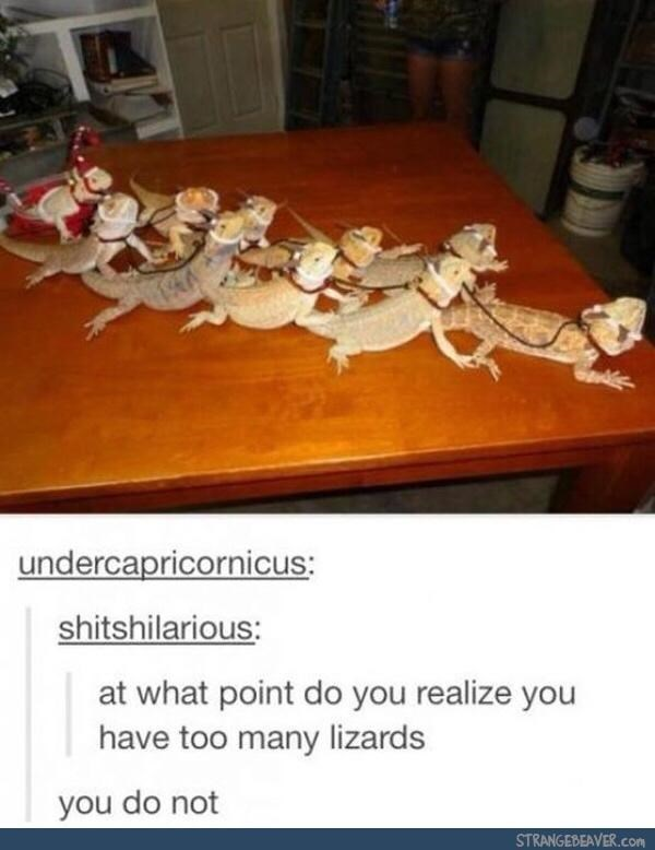 Table - undercapricornicus: shitshilarious: at what point do you realize you have too many lizards you do not STRANGEBEAVER.com