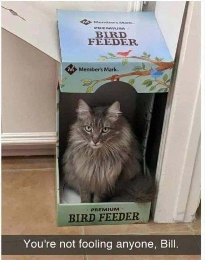 Cat - Memers Mark PREMIUM BIRD FEEDER Member's Mark PREMIUM· BIRD FEEDER You're not fooling anyone, Bill.