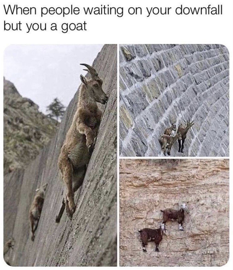 When people waiting on your downfall but you a goat | goats climbing a vertical wall