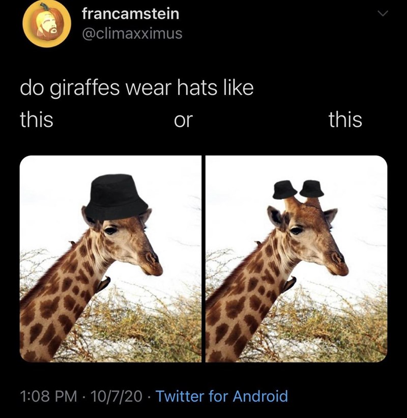 Giraffe - francamstein @climaxximus do giraffes wear hats like this or this 1:08 PM · 10/7/20 · Twitter for Android