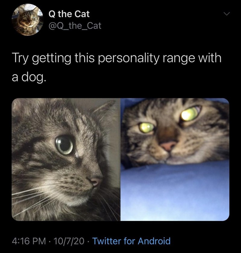 Cat - Q the Cat @Q_the_Cat Try getting this personality range with a dog. 4:16 PM · 10/7/20 · Twitter for Android