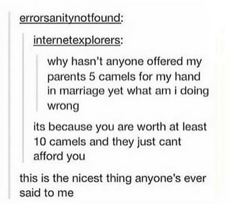 Text - errorsanitynotfound: internetexplorers: why hasn't anyone offered my parents 5 camels for my hand in marriage yet what am i doing wrong its because you are worth at least 10 camels and they just cant afford you this is the nicest thing anyone's ever said to me