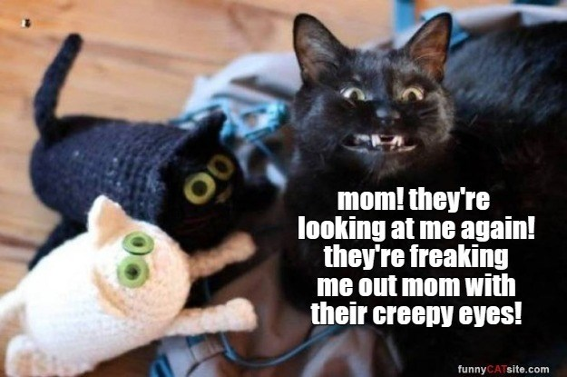 mom! they're looking at me again! they freaking me out mom with their creepy eyes! funnyCATsite.com black cat surrounded by knitted cat plushies toys