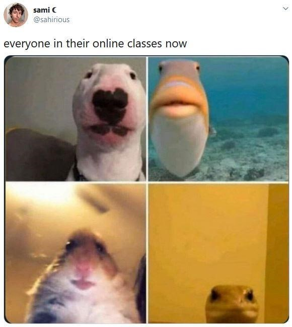Nose - sami C @sahirious everyone in their online classes now