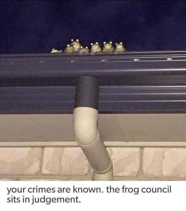 Musical instrument accessory - your crimes are known. the frog council sits in judgement.