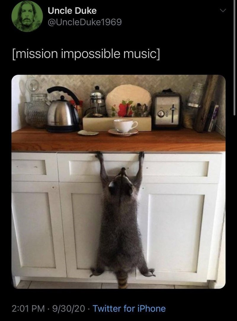 Cat - Uncle Duke @UncleDuke1969 [mission impossible music] 2:01 PM · 9/30/20 · Twitter for iPhone