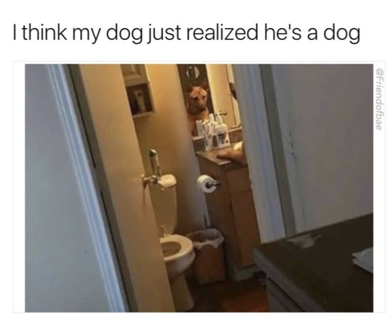 Property - |think my dog just realized he's a dog @Friendofbae