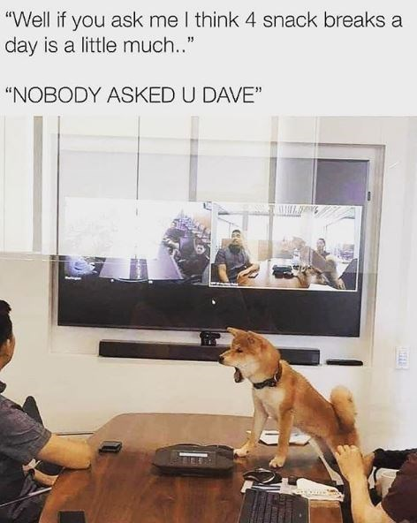 """Dog - """"Well if you ask me I think 4 snack breaks a day is a little much.."""" """"NOBODY ASKED U DAVE"""""""