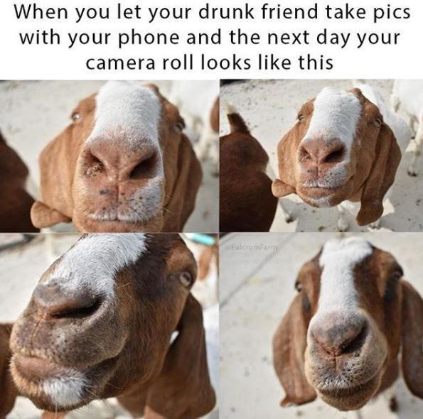 Goats - When you let your drunk friend take pics with your phone and the next day your camera roll looks like this Fulcriumfaray